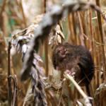 Mysz by Erdbeersternchen