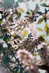 You should see me in bloom by Erdbeersternchen
