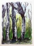 Birch tree studies