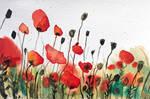 Where the poppies pop by Erdbeerstern
