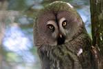 The tale of the owl by Erdbeerstern