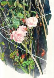 Roses by CharlotteHintzmann