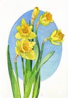 Daffodils by CharlotteHintzmann
