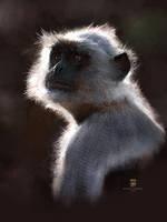 20160131 Monkey Psdelux by psdeluxe