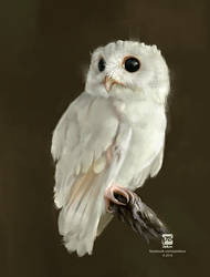 20160711 White Owl Psdelux by psdeluxe
