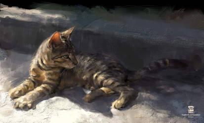 20160903 Cat Psdelux