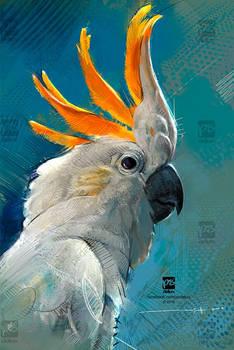 20161122 Cockatoo Bird Psdelux