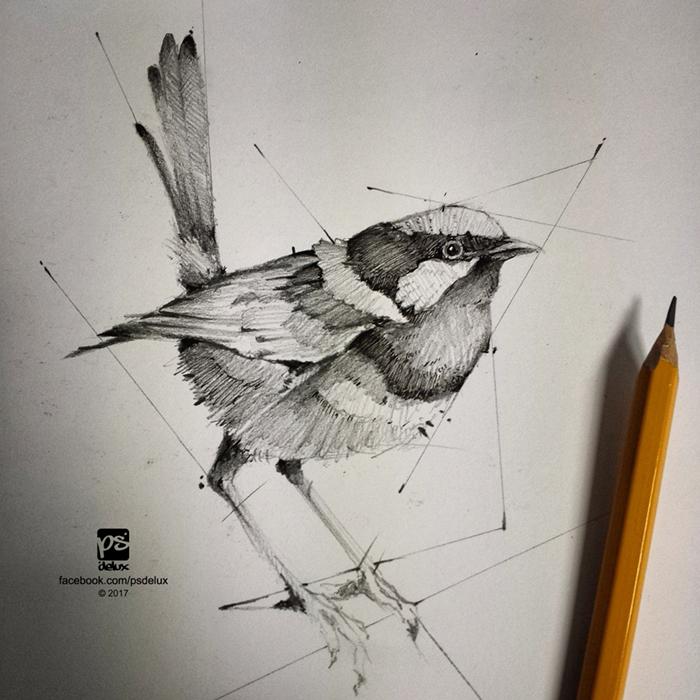 20160209 Bird Sketch Psdelux by psdeluxe