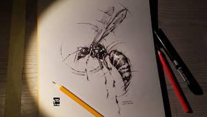 Wasp Sketch Timelapse Psdelux