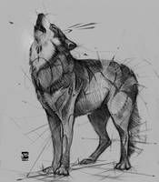 Wolf Sketch Psdelux by psdeluxe