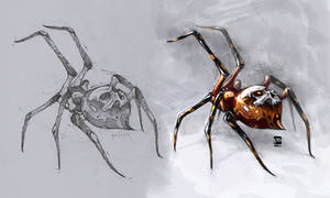 Spider Pencil Colored Psdelux