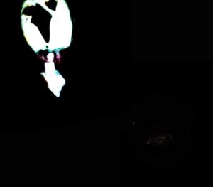 Qxqx4's Profile Picture
