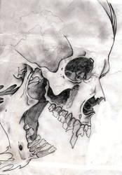 Skull by Veins0fMud