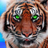 Tiger Icon by LittoMaster