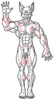Quick Veins Reference