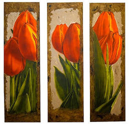 Tulips by paddavis