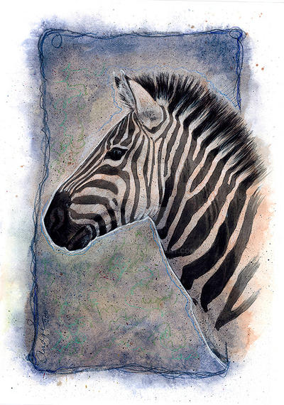 Portrait of a Zebra by paddavis