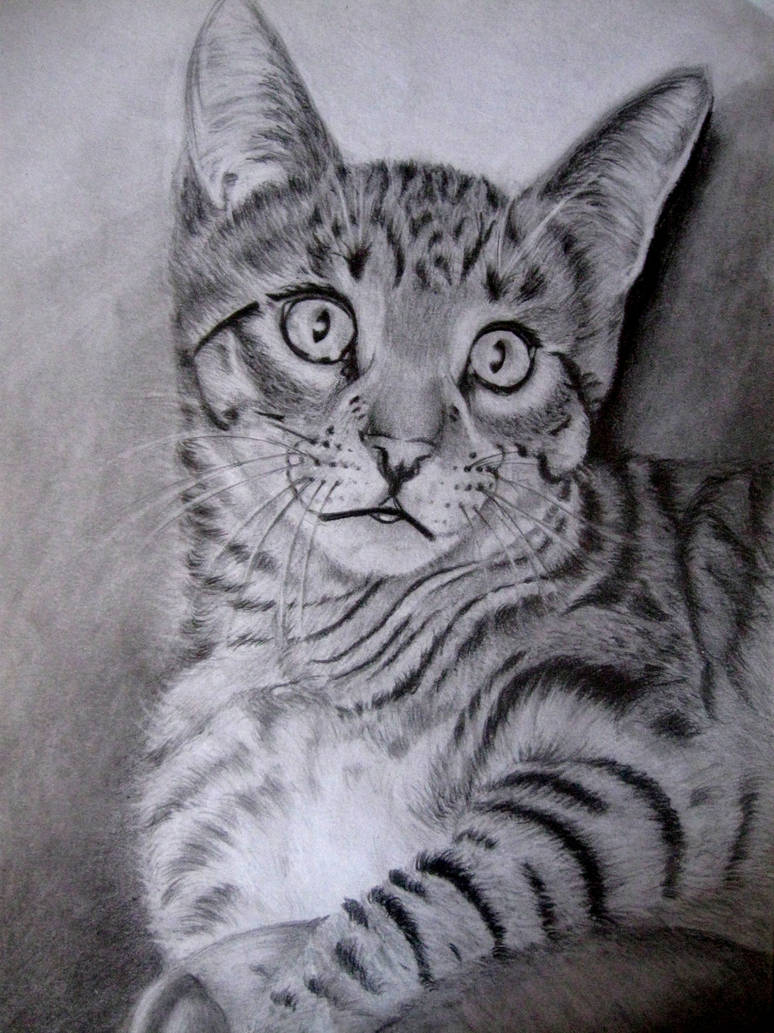 Cat by viki941116