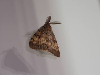 Just a Moth