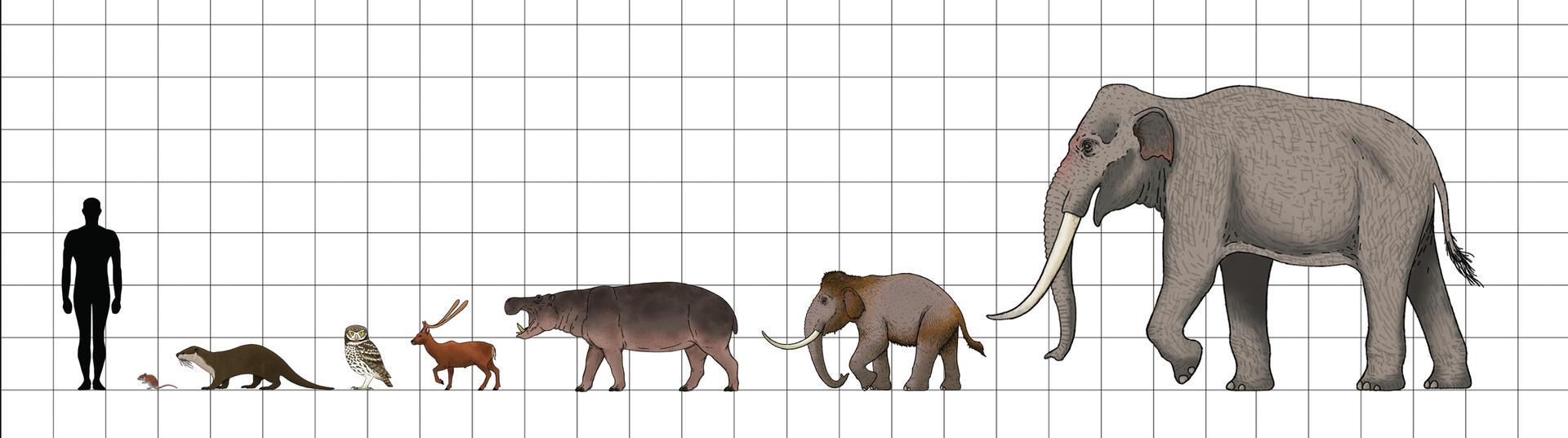 Thalassocène, un monde d'îles Size_chart__pleistocene_fauna_of_crete_by_sanciusart_ddbncqk-fullview.jpg?token=eyJ0eXAiOiJKV1QiLCJhbGciOiJIUzI1NiJ9.eyJzdWIiOiJ1cm46YXBwOiIsImlzcyI6InVybjphcHA6Iiwib2JqIjpbW3siaGVpZ2h0IjoiPD01MzYiLCJwYXRoIjoiXC9mXC9kODVlMDljYi01MzdmLTRlNzEtOTBmYi00MWMwNmY3NzQyZTdcL2RkYm5jcWstYjBlMmIzZDctYTQzNy00ZTY0LWJlNjMtMGU4NTEwZjIyMjZjLmpwZyIsIndpZHRoIjoiPD0xOTIwIn1dXSwiYXVkIjpbInVybjpzZXJ2aWNlOmltYWdlLm9wZXJhdGlvbnMiXX0