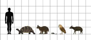 Size Chart: Plio-Pleistocene Fauna of Baleares