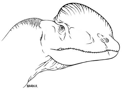 New Dilophosaurus sketch