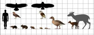 Size Chart-Gargano