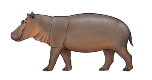 Hippopotamus melitensis Recon