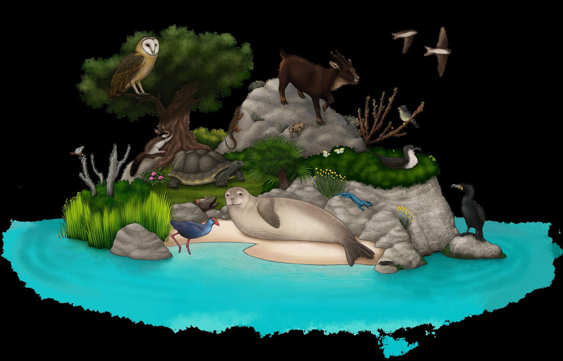 Thalassocène, un monde d'îles Biorama_of_baleares_by_sanciusart_deh0c6g-fullview.png?token=eyJ0eXAiOiJKV1QiLCJhbGciOiJIUzI1NiJ9.eyJzdWIiOiJ1cm46YXBwOiIsImlzcyI6InVybjphcHA6Iiwib2JqIjpbW3siaGVpZ2h0IjoiPD0xMjMyIiwicGF0aCI6IlwvZlwvZDg1ZTA5Y2ItNTM3Zi00ZTcxLTkwZmItNDFjMDZmNzc0MmU3XC9kZWgwYzZnLWQxMzlkOWI1LWJmZTItNGFjMy04NWU1LTIyZWNiNjM3Y2Q1Ni5wbmciLCJ3aWR0aCI6Ijw9MTkyMCJ9XV0sImF1ZCI6WyJ1cm46c2VydmljZTppbWFnZS5vcGVyYXRpb25zIl19