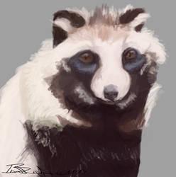 Raccoon Dog Portrait