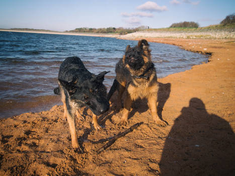 Two crazy dogs.
