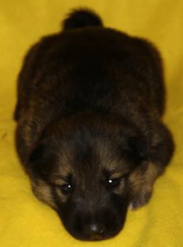 Garie at three weeks