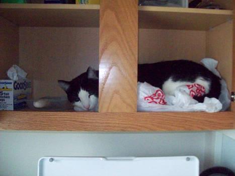 Baby Sleeping in Cupboard