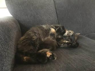 A Classically Cute Kitty