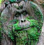 Tree Orangutan