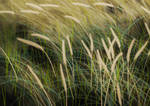 Long grass study (Daily 16)