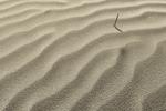 Sand study (Daily 19)