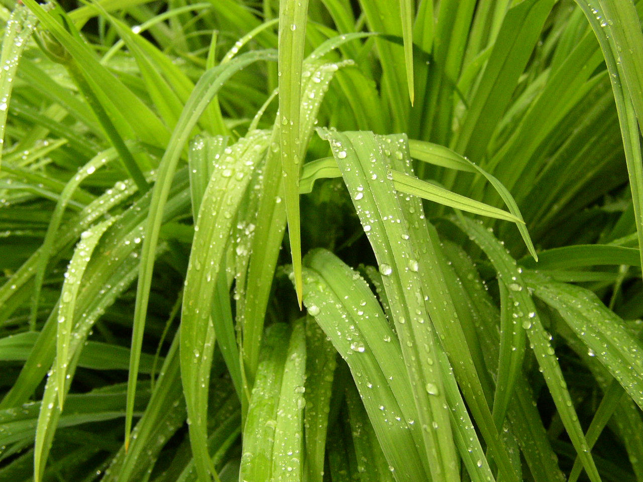 Stock Rained Grass 2 by zommy
