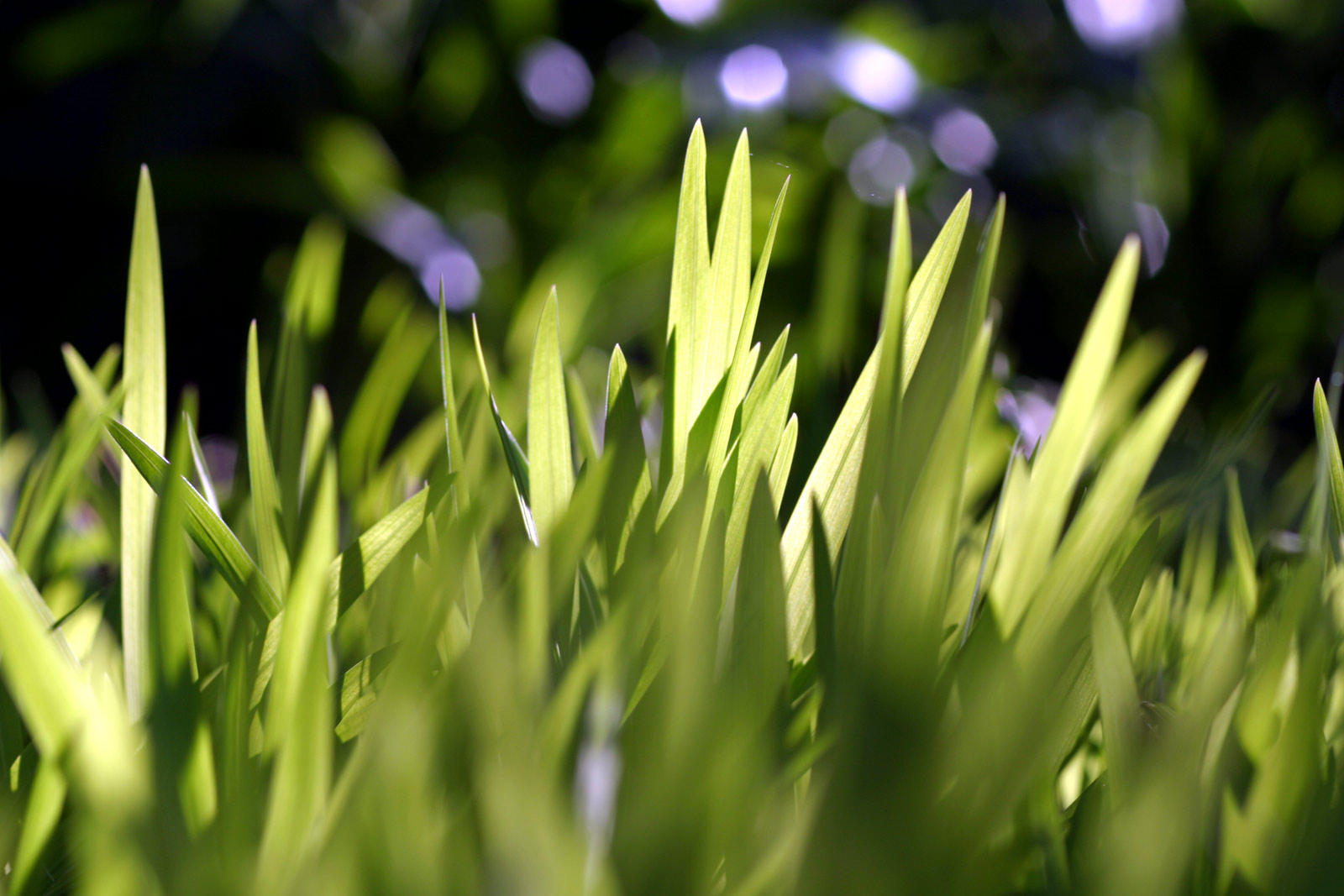 Backlit grass by fl8us-stock