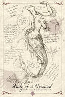 A Study of a Mermaid by MAReiach