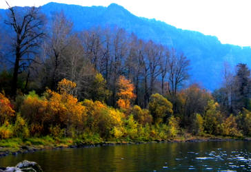 Autumn In Columbia River Gorge