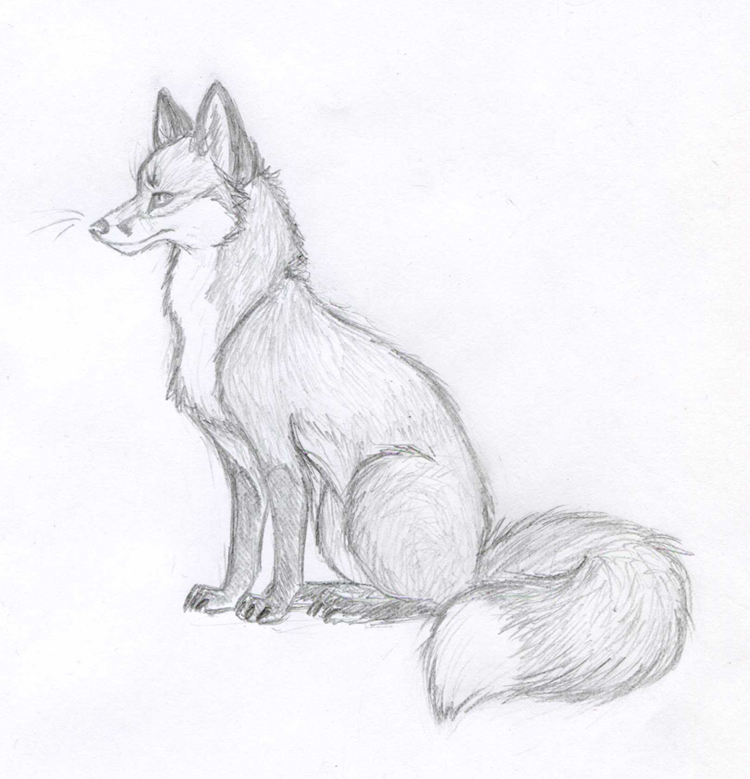 Fox sketch new 2012 by viccinor on deviantart for Cool fox drawings