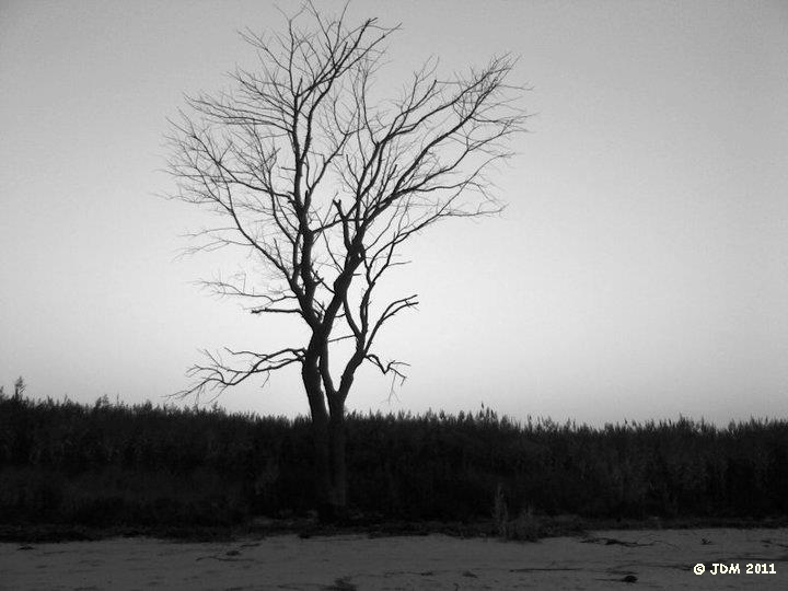 Lonesome Tree by JDM4CHRIST