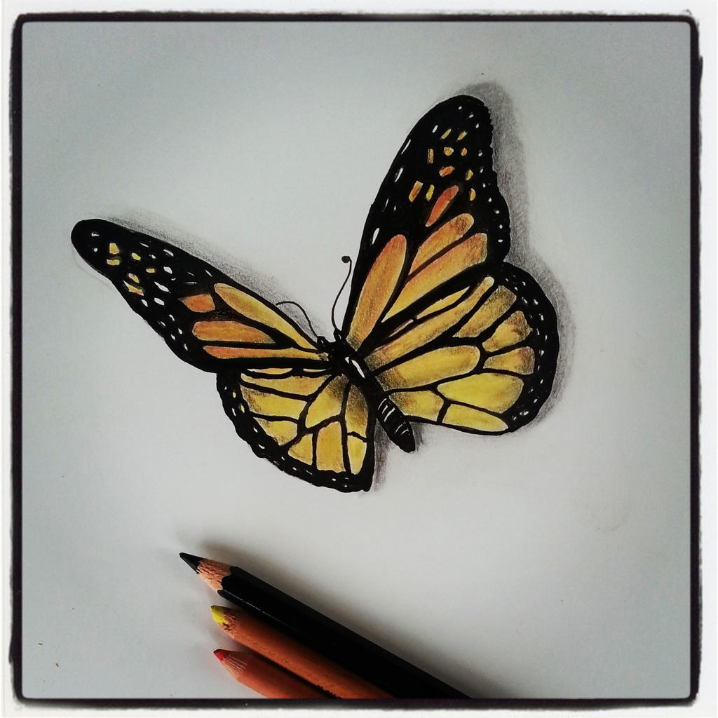 Butterfly on flower drawings with color