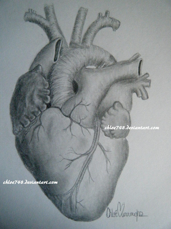 The Human Heart by chloe748 on DeviantArt