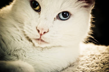 Pretty Kitty II by RubberDuckyDestiny