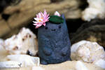 Stone Spirit with Water Lily