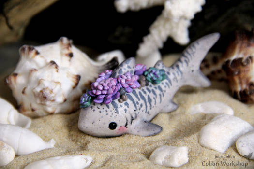 Tiger shark with Succulents
