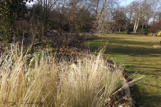 Sun Soaked Grasses