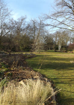 Garden And Grasses